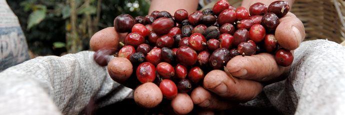 What's Brewing: Guatemala LasIllusiones