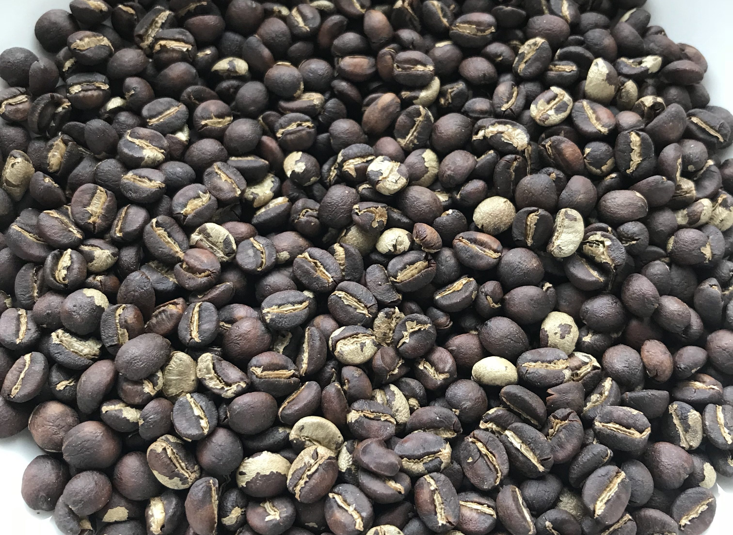 My first coffee crop – a diary